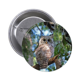 Wild Hoot Owl Staring in Forest 6 Cm Round Badge