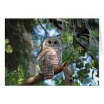 Wild Hoot Owl Staring in the Forest Greeting Card