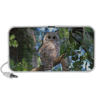 Wild Hoot Owl Staring in the Forest Laptop Speakers