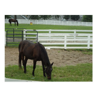 Wild Horse at Heart Postcard