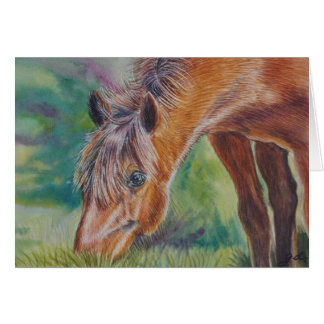 Wild Horse Grazing Card