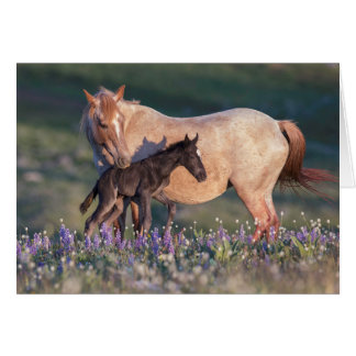 Wild Horse Greeting Card - Electra & Pandora