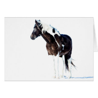 Wild Horse Greeting Card - Winter Paint