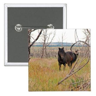wild horse in Mesa Verde Pinback Button