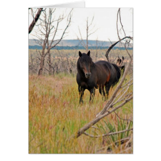 wild horse in Mesa Verde Greeting Card