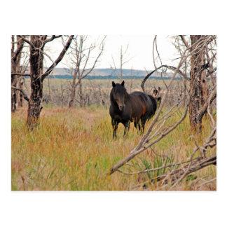 wild horse in Mesa Verde Postcard