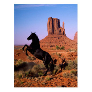 Wild Horse Monument Valley Postcard