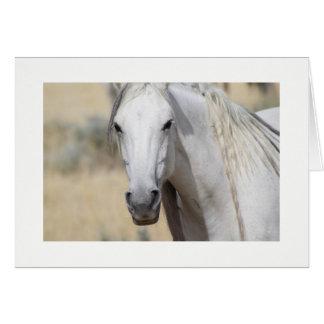 WILD HORSE OF UTAH PHOTOGRAPH CARD