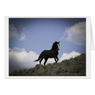 Wild Horse Photography Note Card