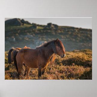 Wild Horse Poster