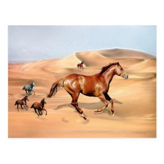 Wild horses and sand dunes postcard