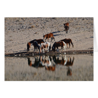 Wild horses at a water hole greeting card