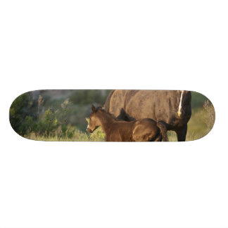 Wild Horses at Theodore Roosevelt National Park 18.1 Cm Old School Skateboard Deck
