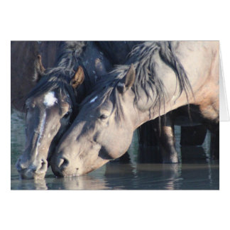 Wild Horses drinking at the watering hole. Card
