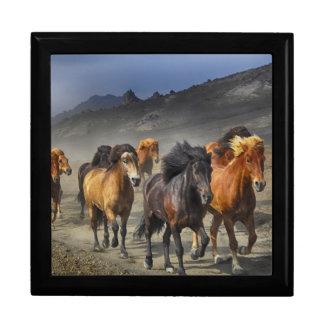 Wild horses gift box