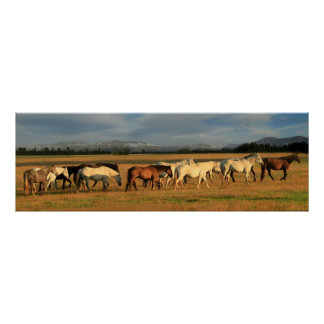 Wild horses in the valley poster
