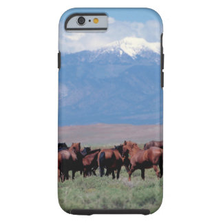 Wild Horses Out West iPhone 6 Case