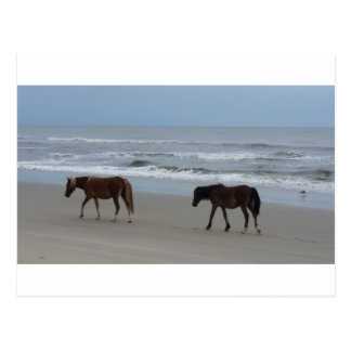 Wild Horses Outer Banks Postcard