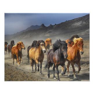 Wild horses photo print