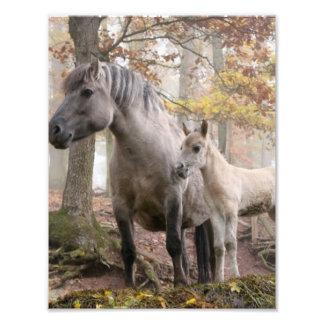Wild Horses Art Photo