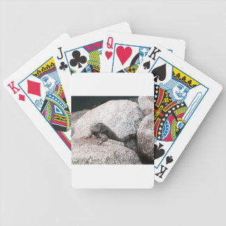 Wild Iguana Bicycle Playing Cards