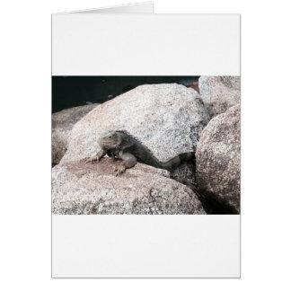 Wild Iguana Card