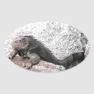Wild Iguana Oval Sticker