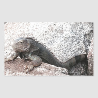 Wild Iguana Rectangular Sticker