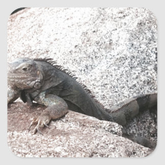 Wild Iguana Square Sticker