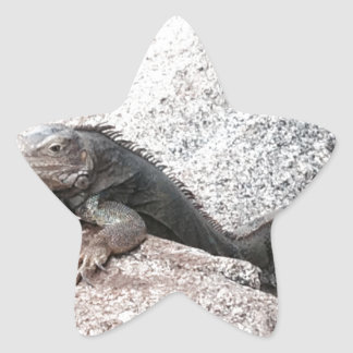 Wild Iguana Star Sticker