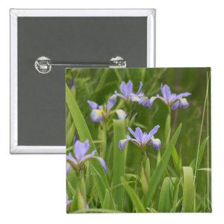 Wild Iris Pinback Buttons