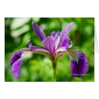 Wild Iris Bloom Card