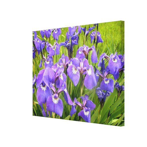 Wild Iris Gallery Wrapped Canvas