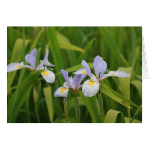 Wild Iris Greeting Cards