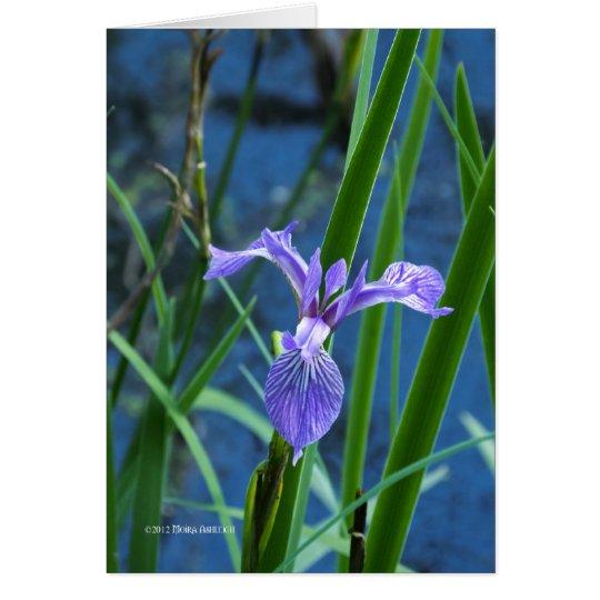 Wild Iris Card