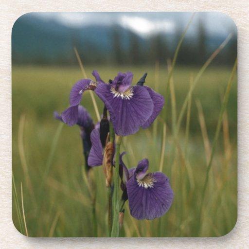 Wild Iris Beverage Coasters