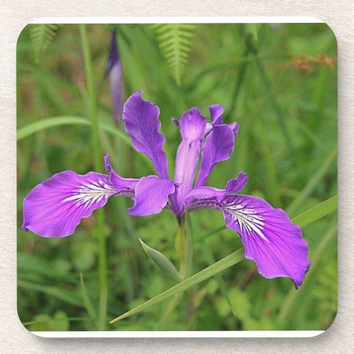 Wild Iris Coasters