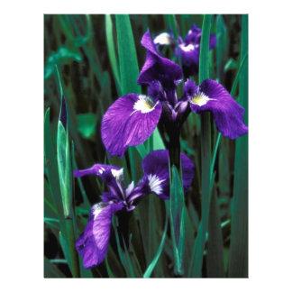 Wild Iris Flyer Design