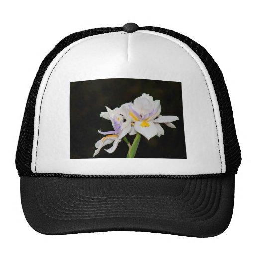 Wild Iris Hat