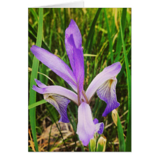 Wild Iris in the Brazos, New Mexico Card
