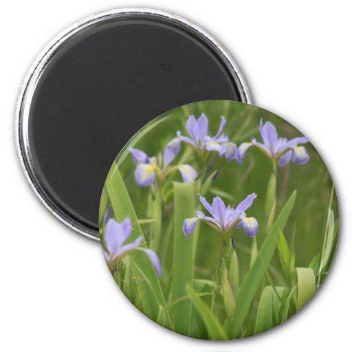 Wild Iris Fridge Magnet