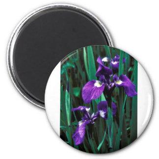 Wild Iris Fridge Magnets