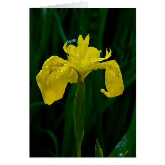 Wild Iris Note Card