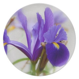 Wild Iris Dinner Plates