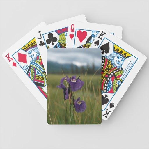 Wild Iris Deck Of Cards