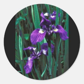 Wild Iris Round Sticker