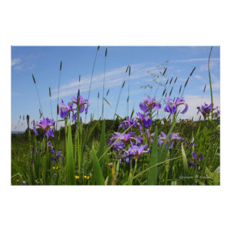 Wild Iris Series No. 5 Poster