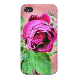 Wild Irish Rose Phone Case iPhone 4 Cases