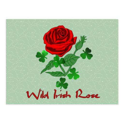 Wild Irish Rose Post Cards