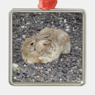 Wild Jack Rabbit Ornament